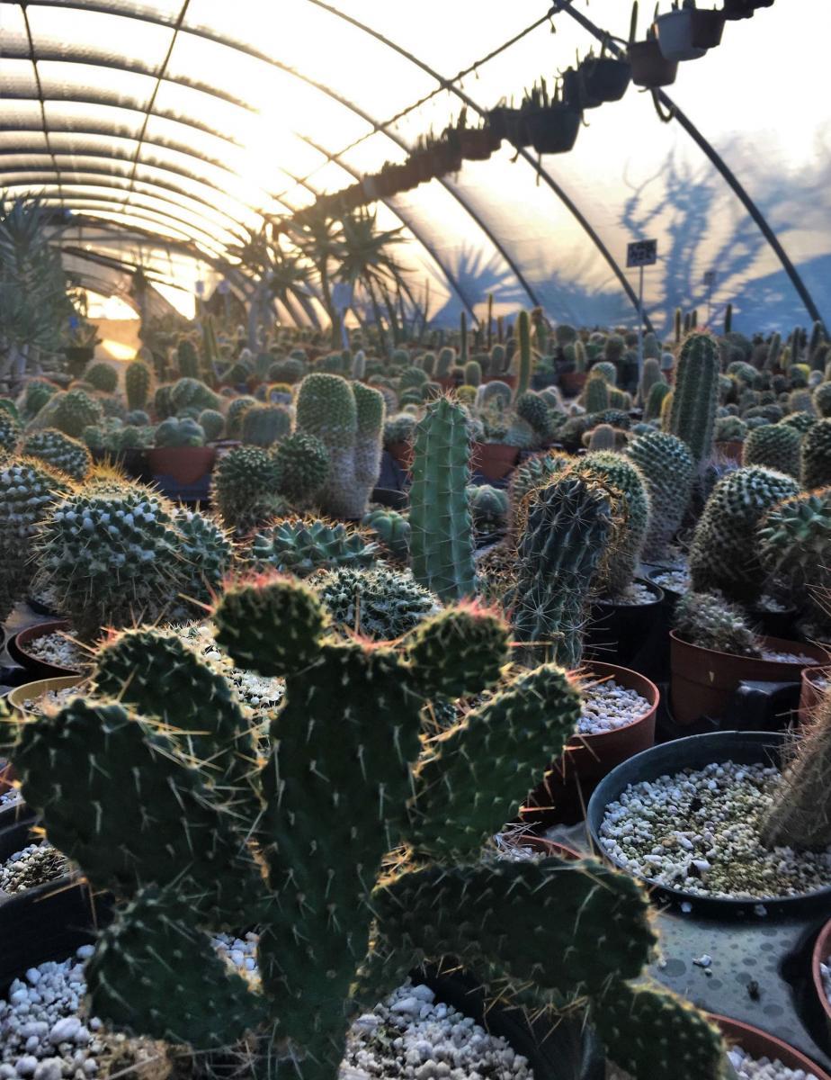Succulent Farm Nursery Proudly